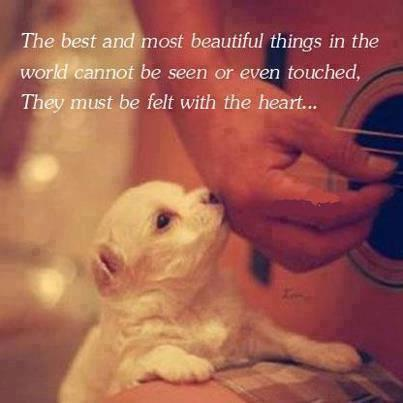 The best things in life are felt in the heart.