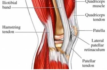 quadriceps tendon