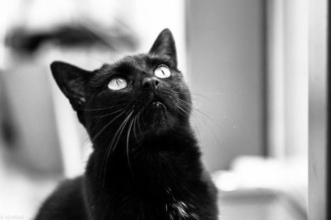 Meine Katze-1