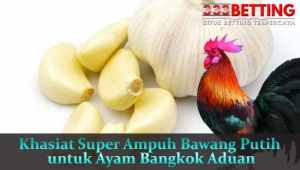 Khasiat-Super-Ampuh-Bawang-Putih-untuk-Ayam-Bangkok-Aduan