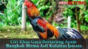 Ciri-Khas-Gaya-Bertarung-Ayam-Bangkok-Birma-Asli-Kulaitas-Jawara
