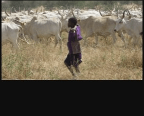 Famine, rise in cost of produce imminent as herders' attacks on Ogun communities persist
