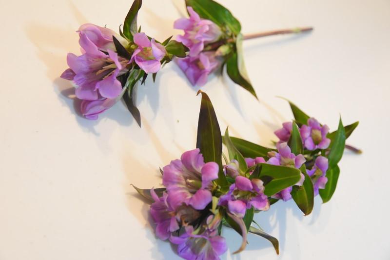 ブルーミーライフ_4回目のお届け分のお花