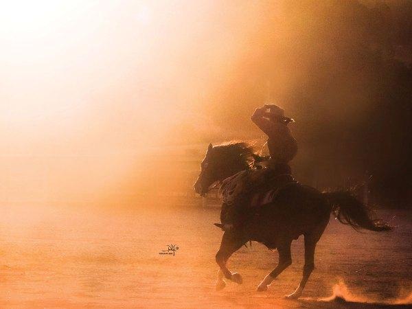 The Versatile Arabian