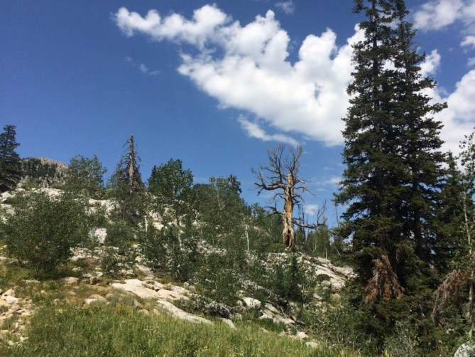 Why I Moved to Utah - An Old Tree Stands
