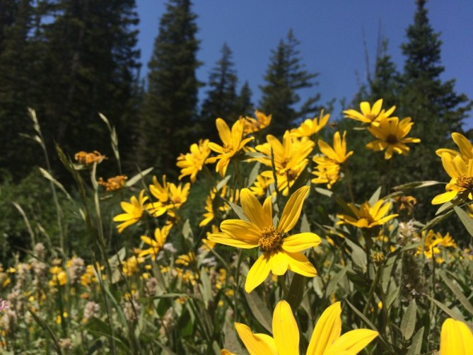 Why I Moved to Utah - More Yellow Flowers