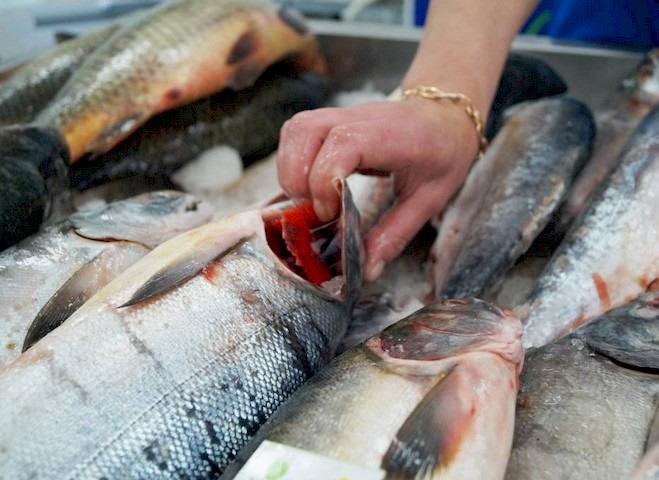 鱼制备腌制