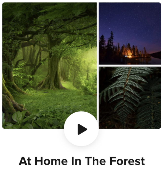 forest visualization