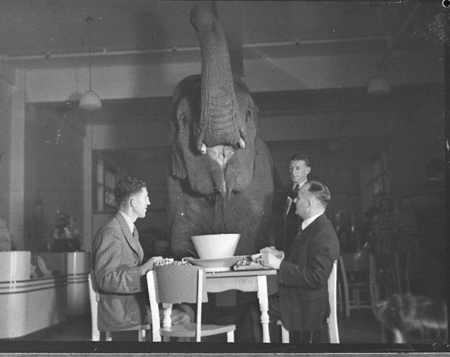 Elephant's tea party, Robur Tea Room, 24 March 1939, by Sam Hood