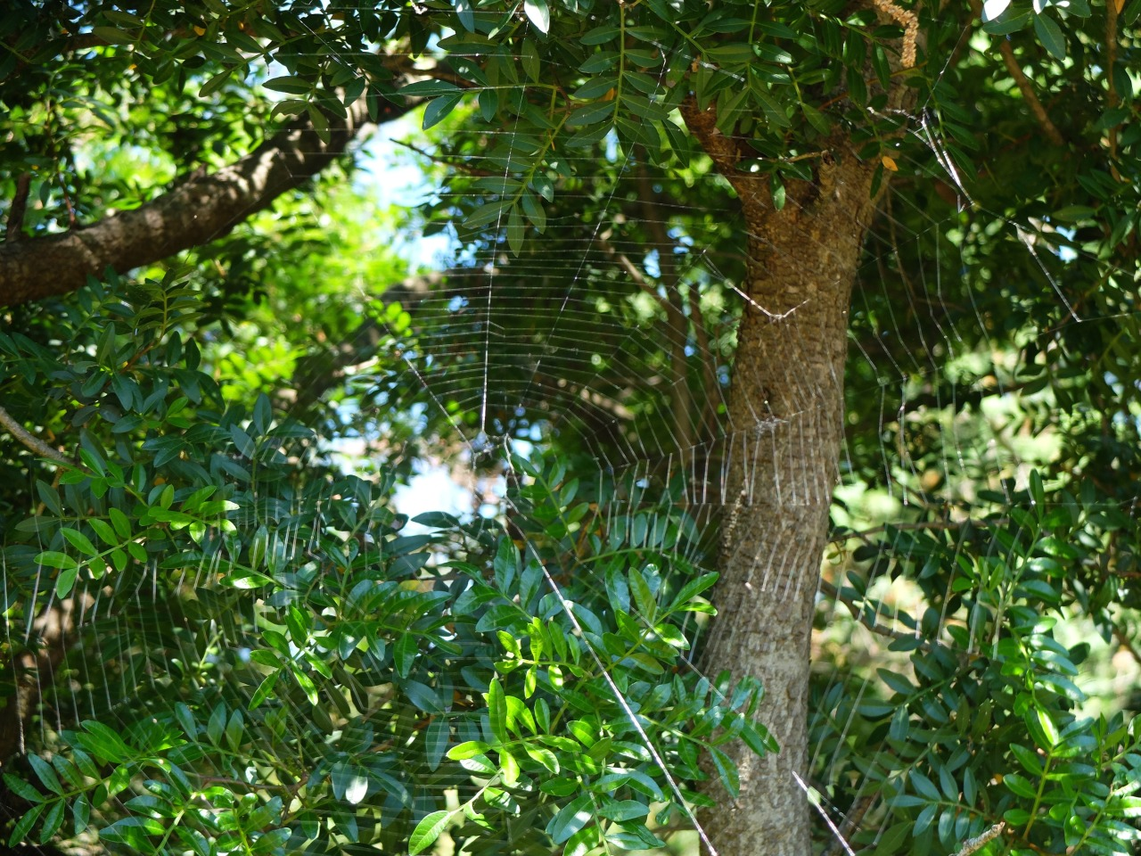 mangia minga - Croatia - of spiders, rocks and caravans