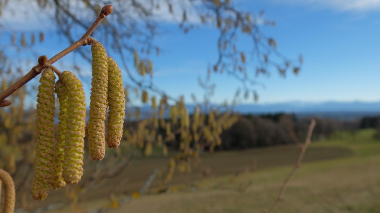 mangia minga - Spring breaking through