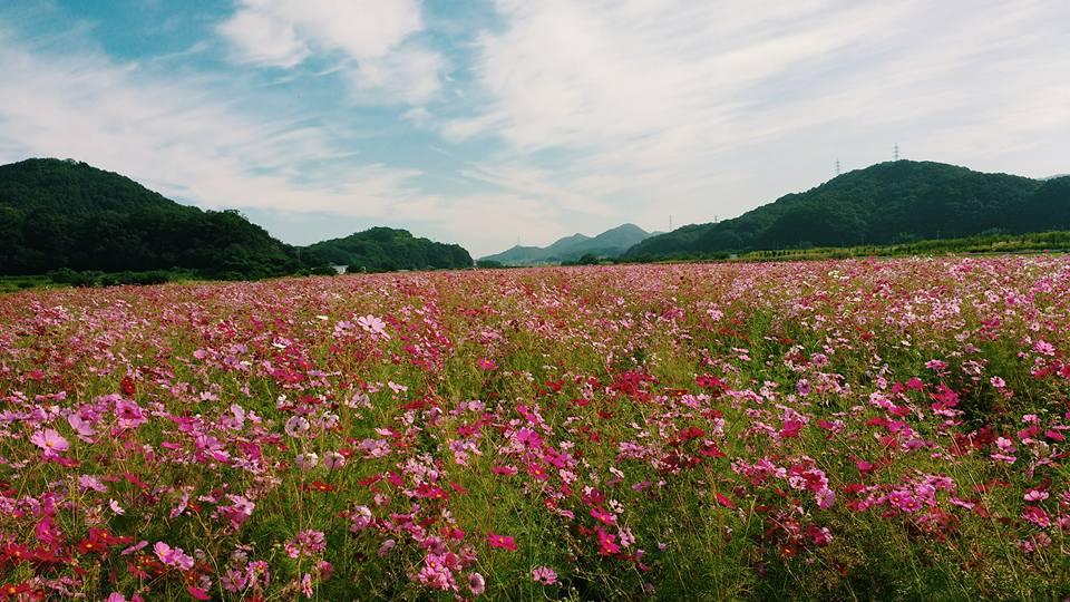 okayama_cosmos_2