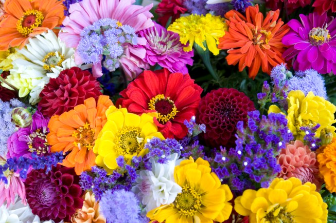 Boost-Your-Well-Being-With-Flowers-Bellevue-Wahsington