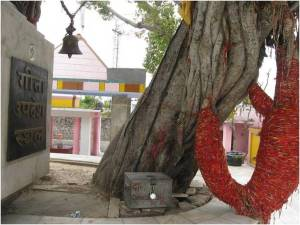 tree who hear bhagwat geeta,