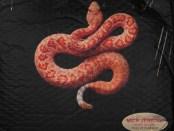 Download Mick Jenkins Ft Kojey Radical Snakes mp3 Download