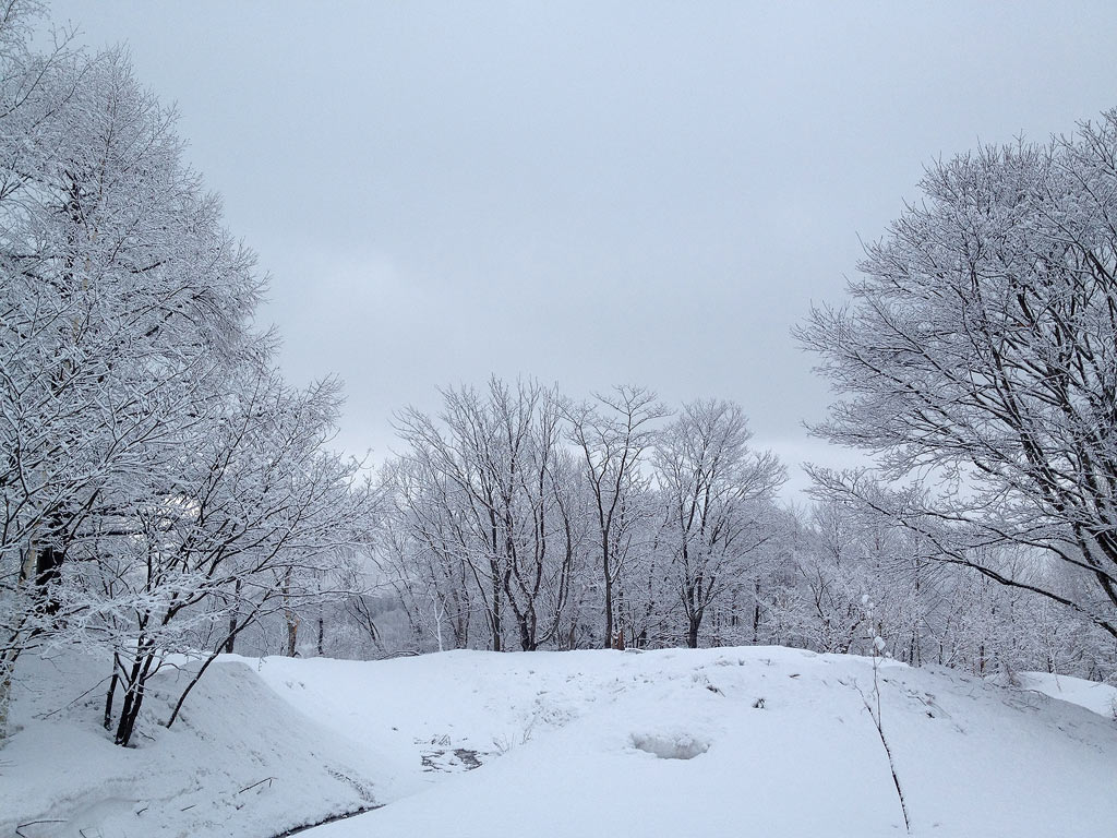 Snow covered trees, 10 April 2013