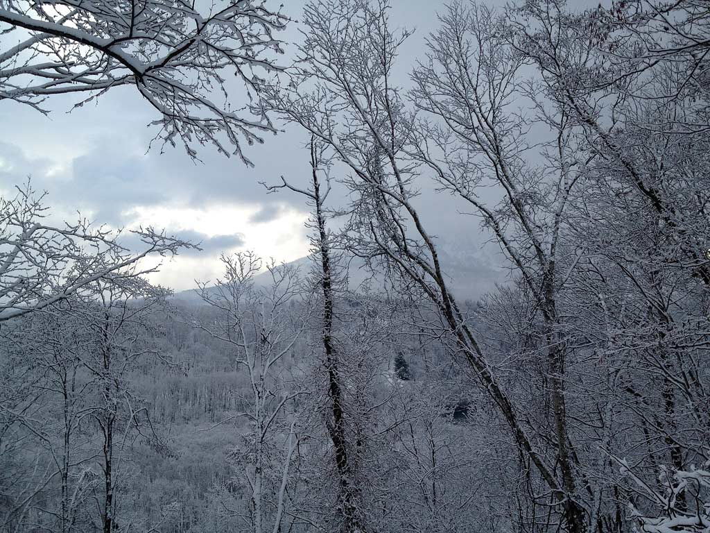 Snow covered forest in lower Hirafu village, 20 April 2013