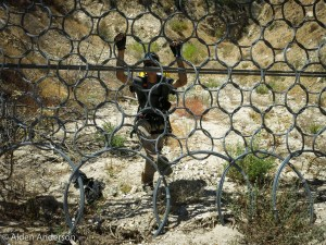 Debris fence (Brownside Canyon — It's all in the name)
