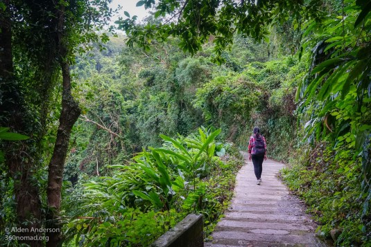 Forested section of the hike to Victoria Peak
