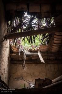 Yim Tin Tsai Plants on the roof