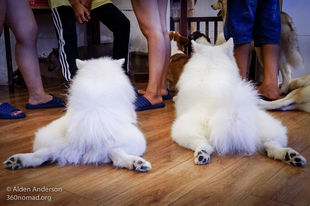 Saigon's Dog Cafes