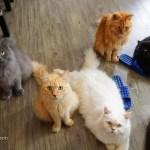 Tokyo Pet Coffee - Cat Cafe