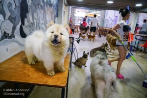 Yuna Alaska - Dog & Cat Cafe, Ho Chi Minh City