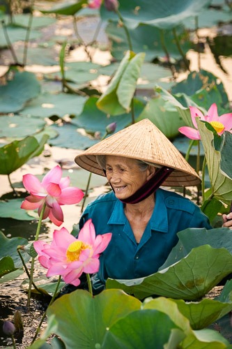 Ba, Lotus Harvest, Hoi An, Vietnam