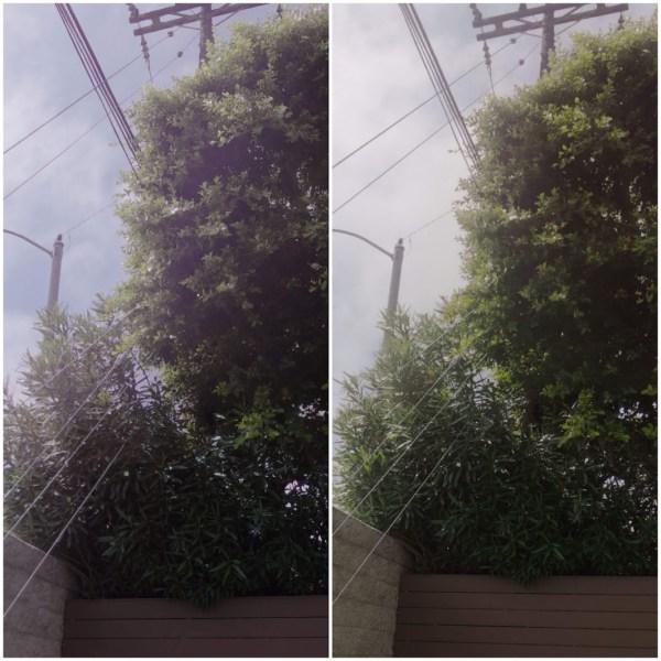 Glare on 2019 (left) vs 2020 (right)