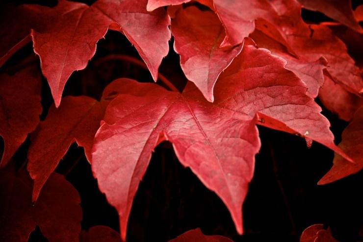 Profondo rosso autunnale