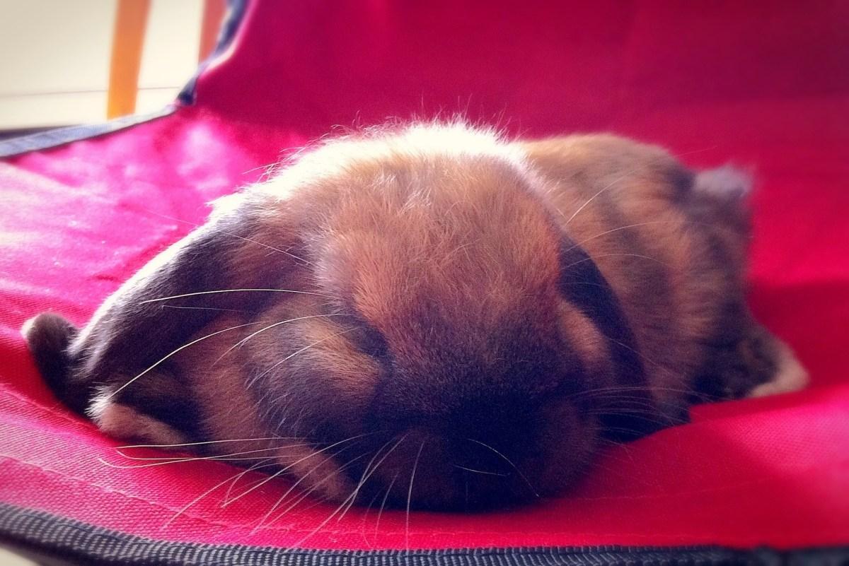 004: My baby bunny
