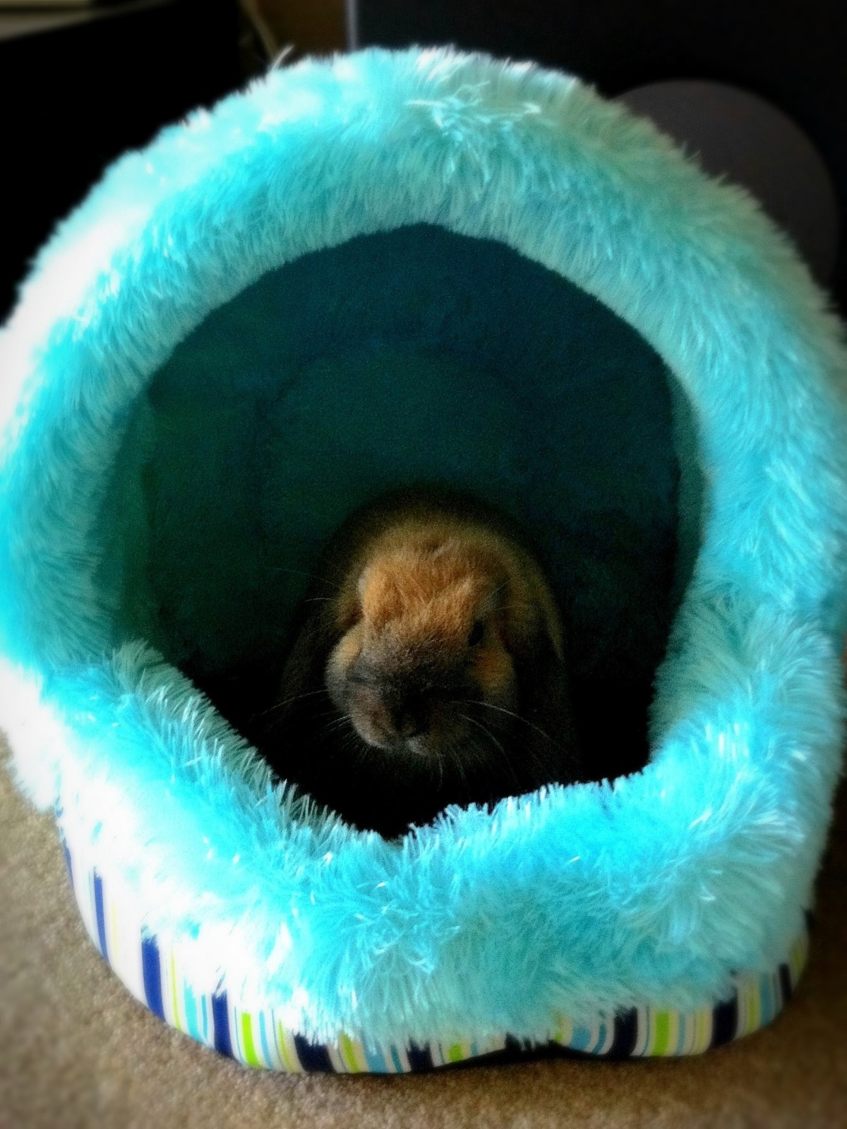 007: Kaylee's igloo