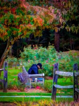 November in the Garden