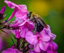 pollen1.3