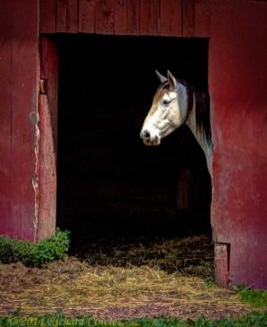 whitehorse2.2