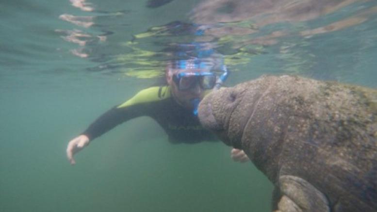 Swim with Manatee Crystal River FL