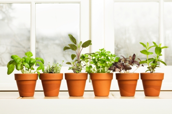 Learn to Grow Your Own Herb Garden