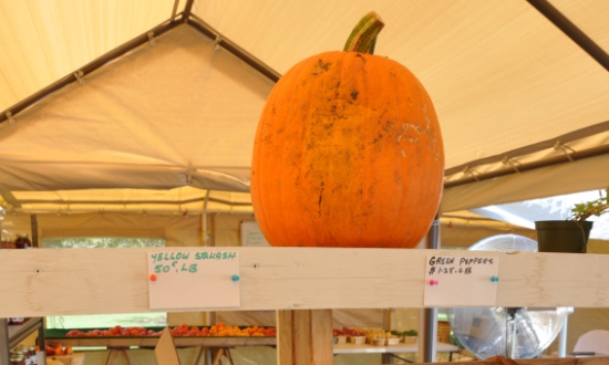 Fall Pumpkin Shopping in Barrington, Illinois