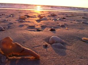 """Seashell Sunset"" by Kelly Katis"