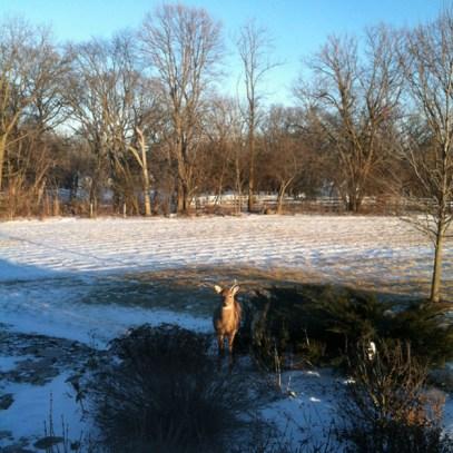 Post - Deer Spotting in Pond Gate