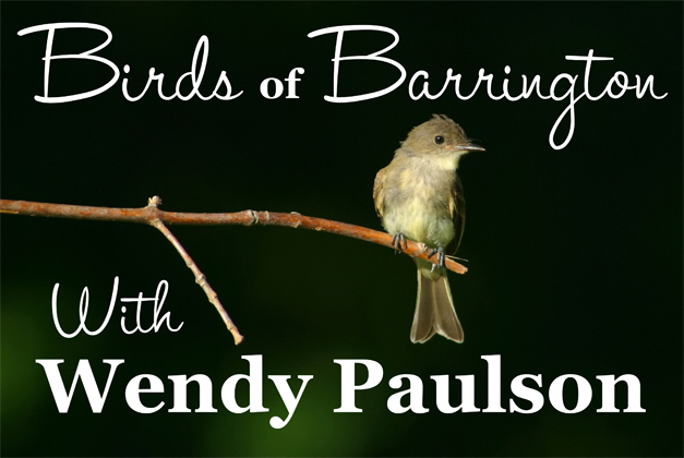 Birds of Barrington with Wendy Paulson