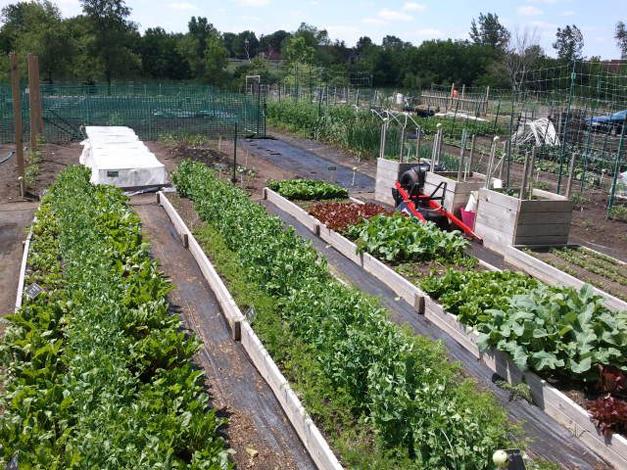 Smart Farm Garden at Ron Beese Park - Courtesy of Smart Farm