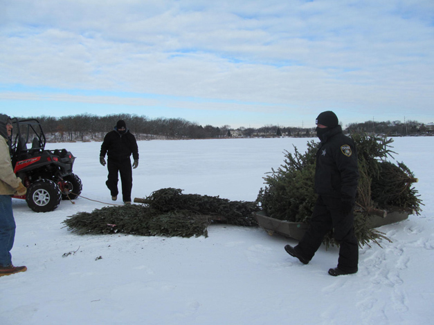 Christmas Trees Transported to Refresh Nests at Baker's Lake Rookery - Photo by Steve Halm