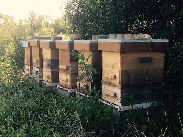 The Gentleman Farmer welcomed bees to the farm this spring - Photo by Jessica Green