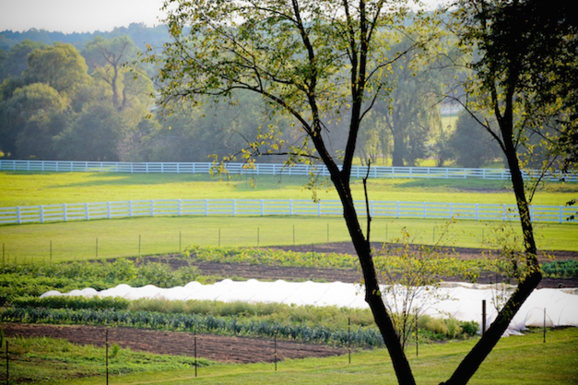 The Gentleman Farmer's first field - Photograph courtesy of Christina Noel Photography