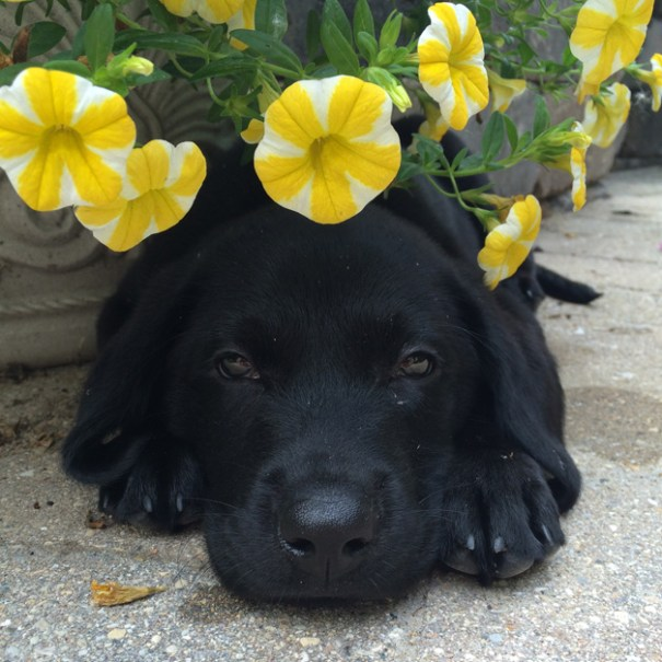 Murphy: Submitted by Elaine Fischer