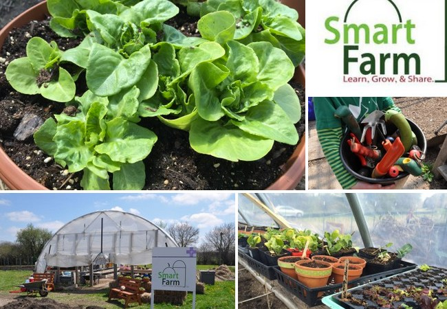 Smart Farm Organic Veggie Plant Sale this Saturday Only!