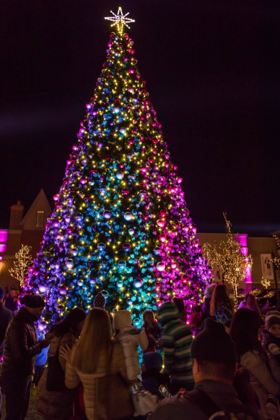 365 - Arboretum of South Barrington Christmas Tree