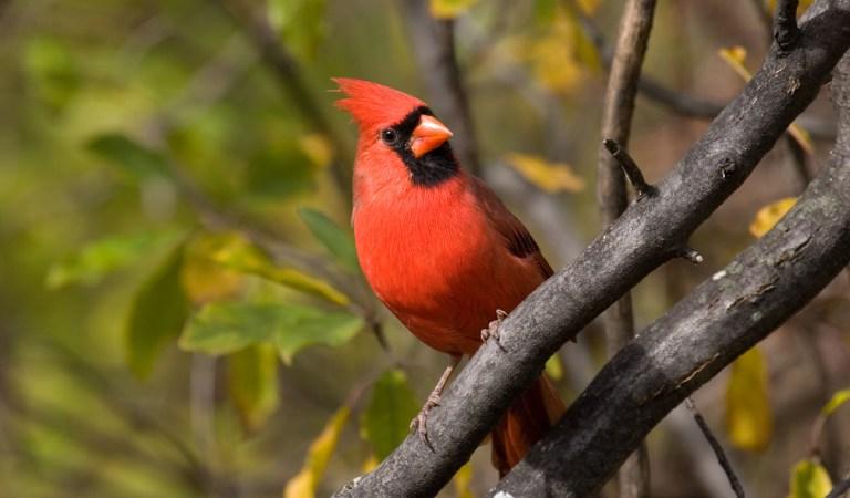 Wendy Paulson' Barrington Area Bird Hikes this Fall!