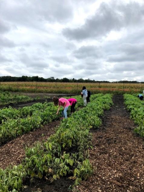 Farm Field Trip 6